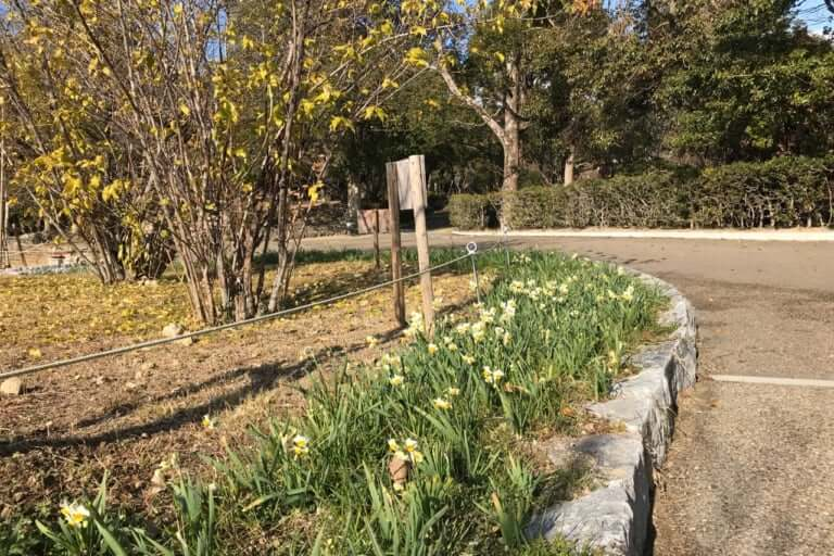 緑ヶ丘公園の梅林跡地
