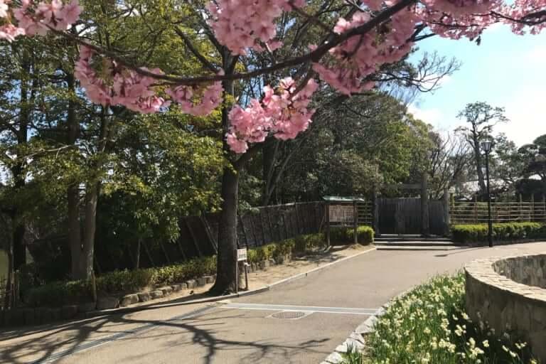 伊丹市の桜前線は?お花見に緑ヶ丘公園へ