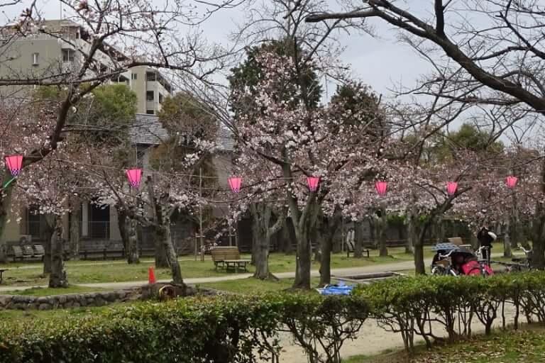 2019西武庫公園桜まつり