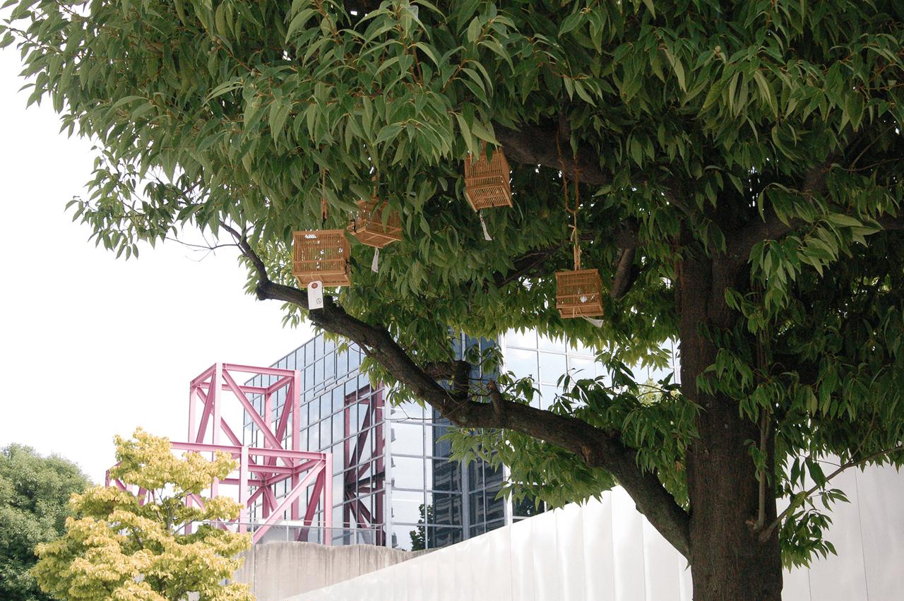 街路樹に吊り下げられた虫かご
