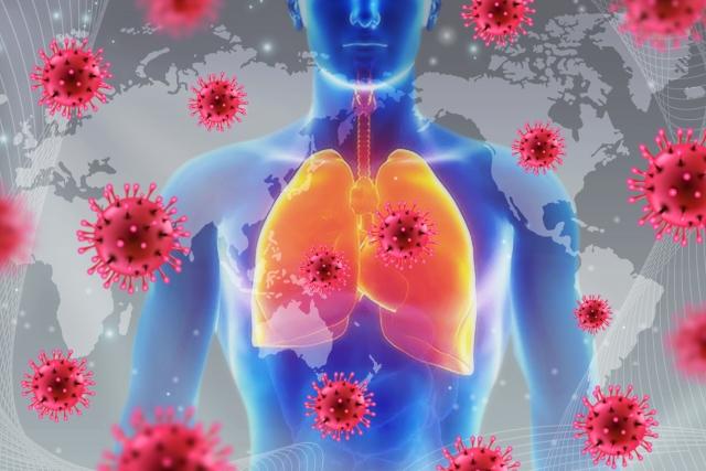 人間の肺とウイルス