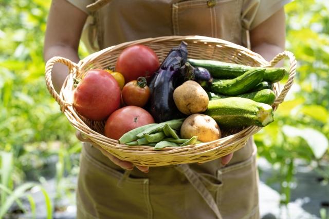 かごの中のトマトやキュウリやナス